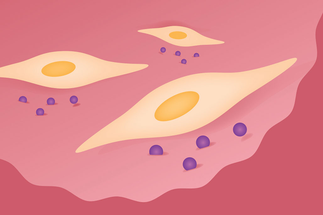 Stem cells migrate to sites of tissue injury within the body and facilitate tissue repair.