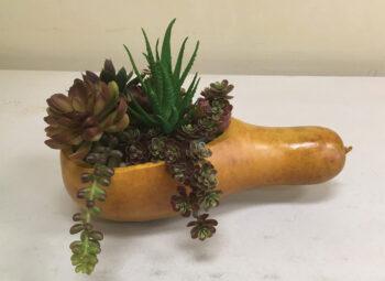 Planter by Kathy Foran