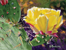 Diana Madaras' Desert in Bloom